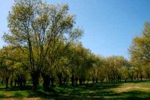 Panoramica del parque de la Fresneda en Soto del Real