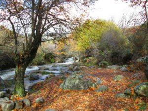 Paisaje otoñal del rió Mediano de Soto del Real